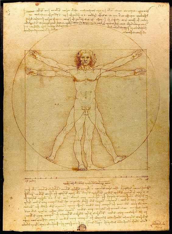 Der vitruvianische Mensch von Da Vinci mit perfekten Propotionen - oder?