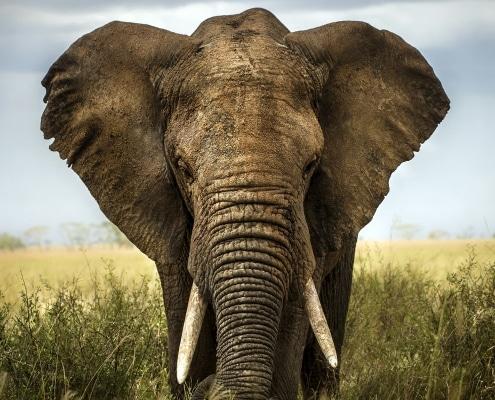 Ein Elefant zum Frühstück: Wie geht User Story Slicing?