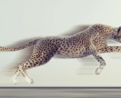 Musterhaft sprinten