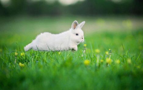 Keine Panik, Kaninchen